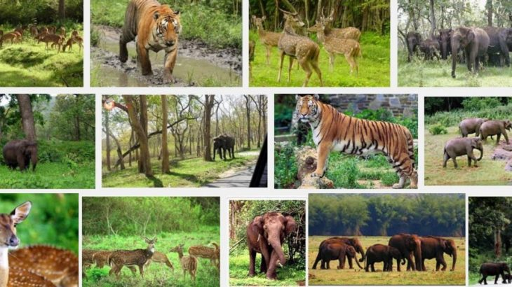 why is wildlife important to the human beings