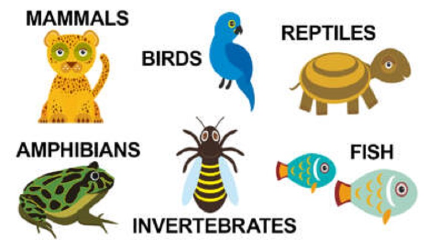 Types Of Animals Nature And Their Characteristics