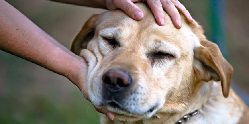 How To Pet A Dog You Don't Know?
