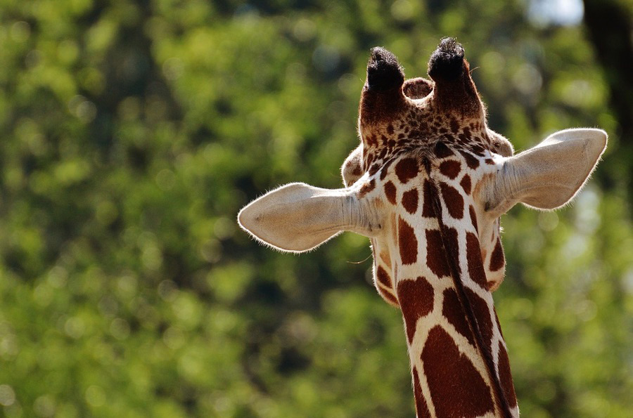 10 best things about animal nature to know best facts
