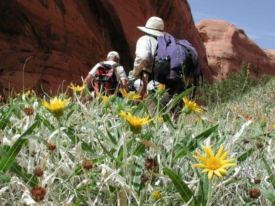 canyonlands-field-institute