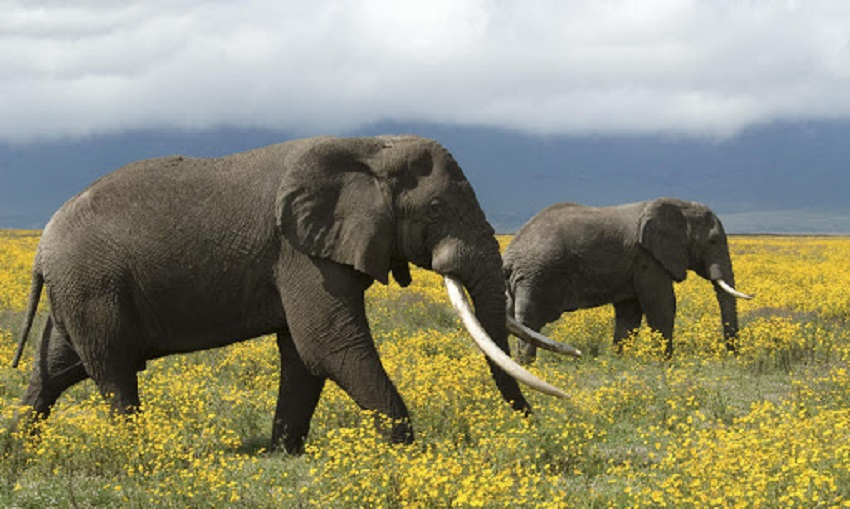 10 animal species where they are the leaders