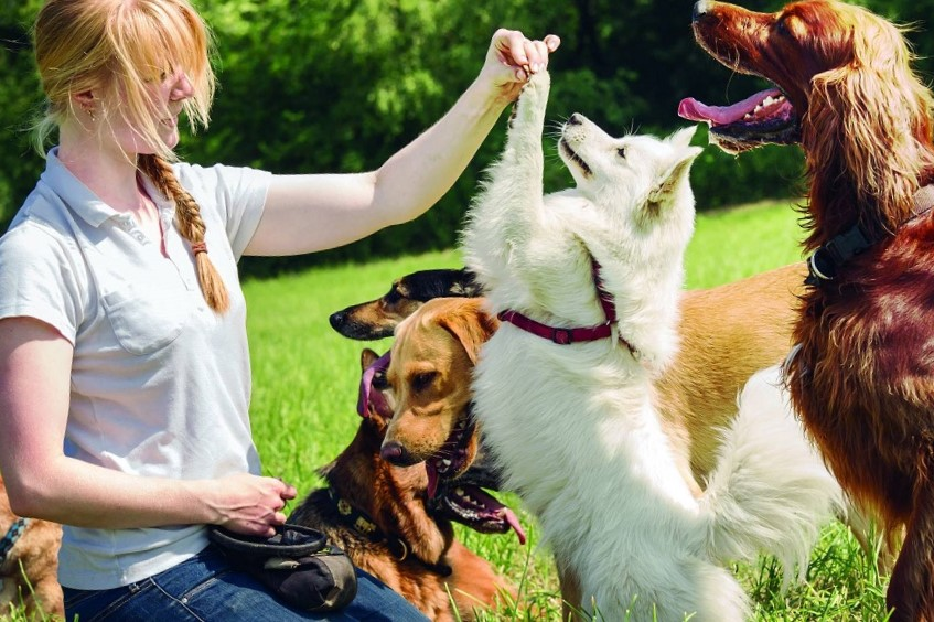 Key Aspects of Taking Good Care of Your Dog