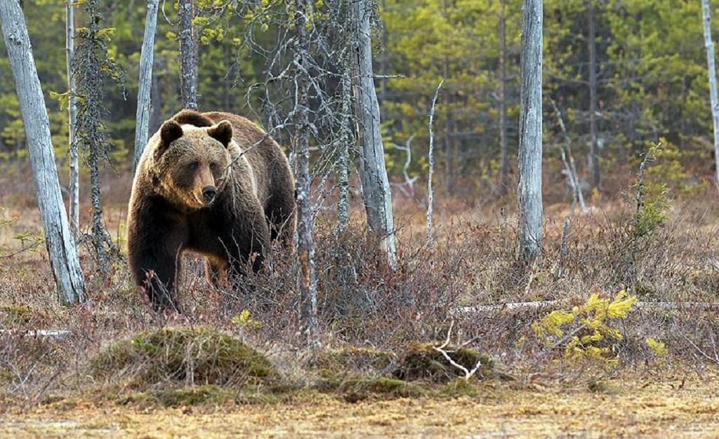 Secrets of successful wildlife watching