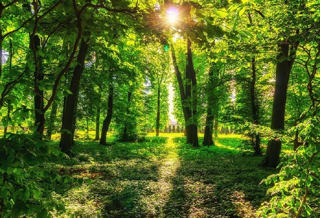 Importance of conservation and protection of the environment